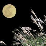 ロマンチック、都内のお月見ポイントは?